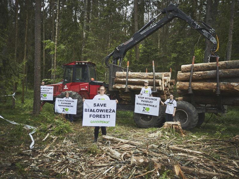Protest ekologów z Greenpeace w Puszczy Białowieskiej, źródło: Flickr
