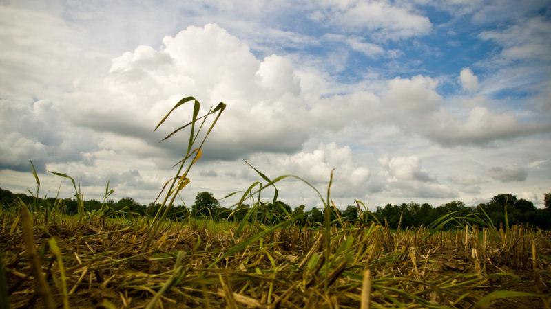 susza, źródło: flickr.com/ Jose Ibarra