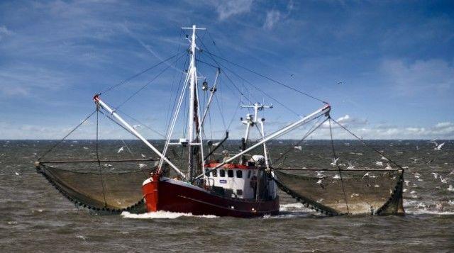 Niestety w zeszłym roku ministrowie zadecydowali o limitach wyższych niż rekomendowane przez doradztwo naukowe w przypadku czterech z dziesięciu bałtyckich całkowitych dopuszczalnych połowów.