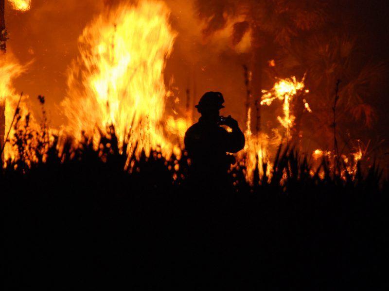 Pożar lasu, źródło: Flickr/fot. Josh O'Connor - USFWS