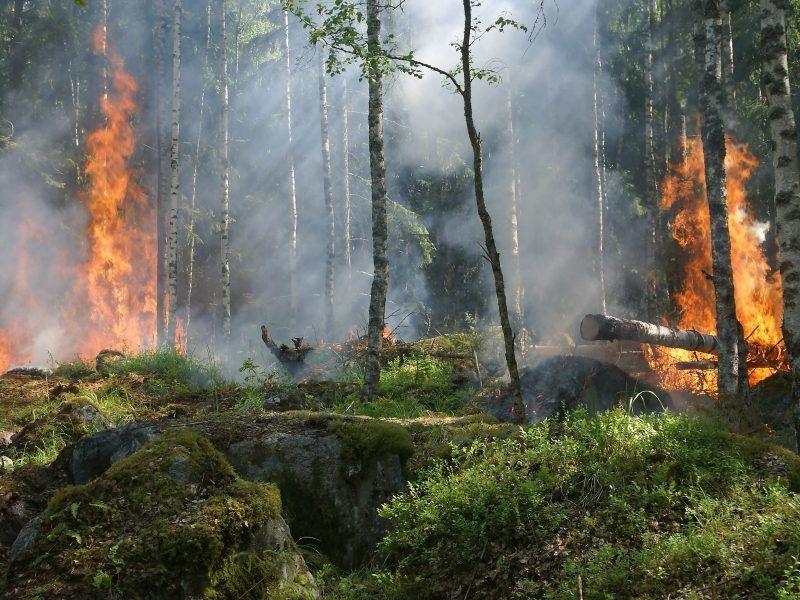 Pożar lasu, źródło: pxhere