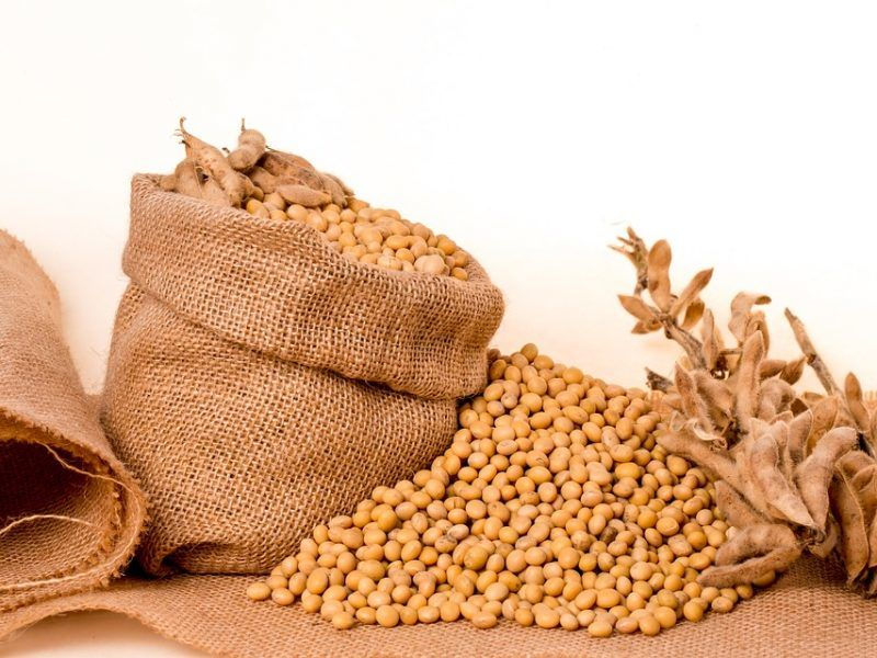 Soja, źródło: MaxPixel (https://www.maxpixel.net/Plants-Oil-Burlap-Soybeans-Beans-Seeds-Bag-Grain-2039639)