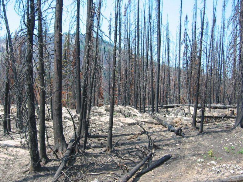 Spalony las, źródło: Wikipedia, fot.Bcasterline