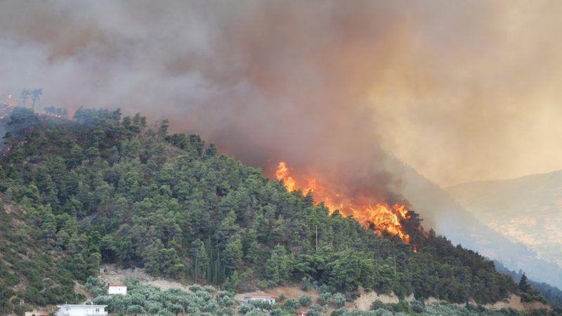 Pożar lasu w Grecji, źródło: Flickr/Lotus R