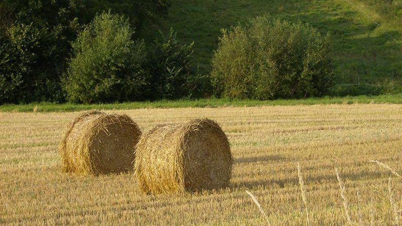 Wyższe ceny wywierają jeszcze większą presję na rolników, którzy jednocześnie muszą zmagać się z konsekwencjami wyjątkowo trudnego lata. Źródło: Komisja Europejska