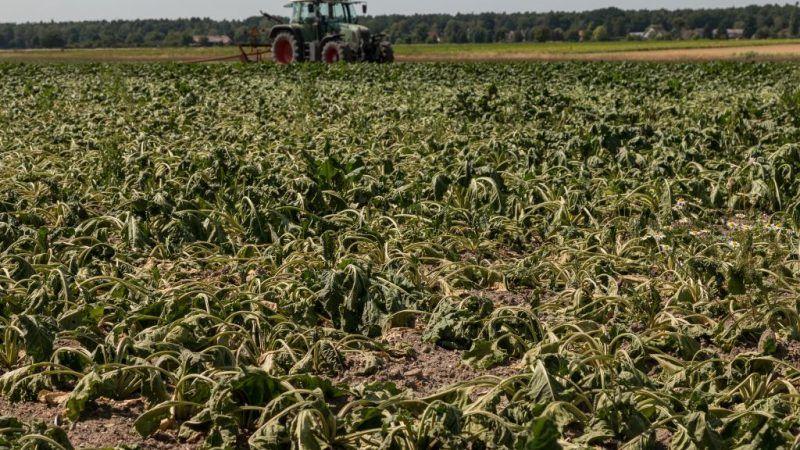 Ostatnim razem Berlin zgodził się na wsparcie finansowe dla rolników w 2003 r. Źródło: Komisja Europejska