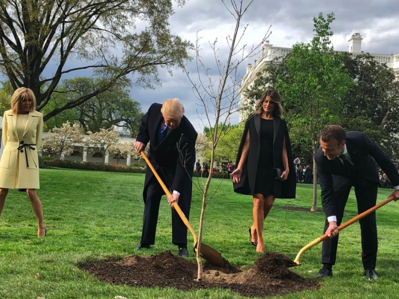 Donald Trump i Emmanuel Macron sadządąb w ogrodzie Białego Domu w towarzystwie pierwszych dam Francji i USA, źródło: Voice of America, fot. Steven L.Herman (CC0 Public Domain)