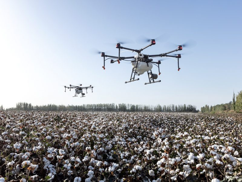 Dron nad polem bawełny [Pixabay]
