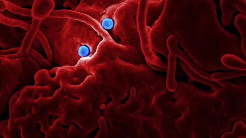 Coronavirus / Koronawirus. Source: Unsplash, fot. CDC