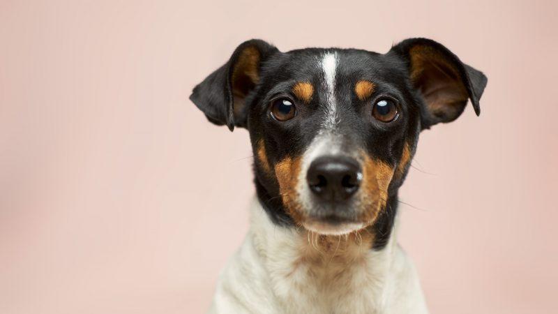 """Psy """"wywąchają"""" koronawirusa? Zdjęcie: Victor Grabarczyk - Unsplash"""