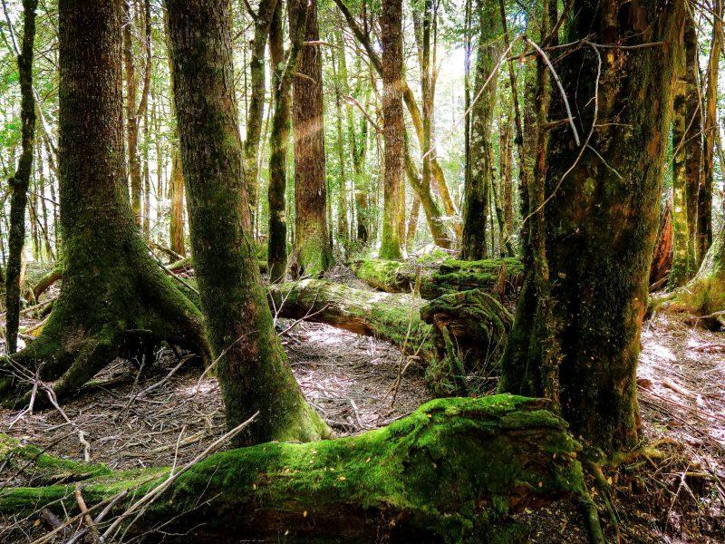 Wycinka lasów tropikalnych Przyroda naturalna szczepionka.