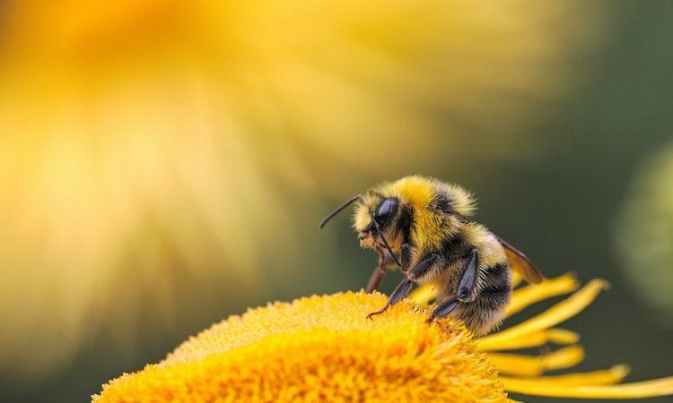 Szacuje się, że 50 mln pszczół odnaleziono martwych w komitacie Żupania medzimurska w północnej części Chorwacji przy granicy z Węgrami.