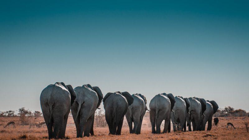 Zagadka śmierci słoni w delcie rzeki Okawango w Botswanie została rozwiązana. Ale nie do końca (Photo by Sergi Ferrete on Unsplash)