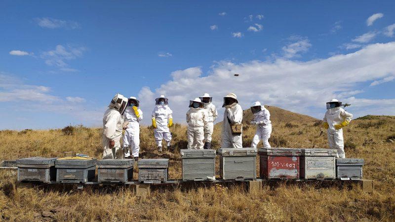 Hiszpania, bioróżnorodność, pszczoły