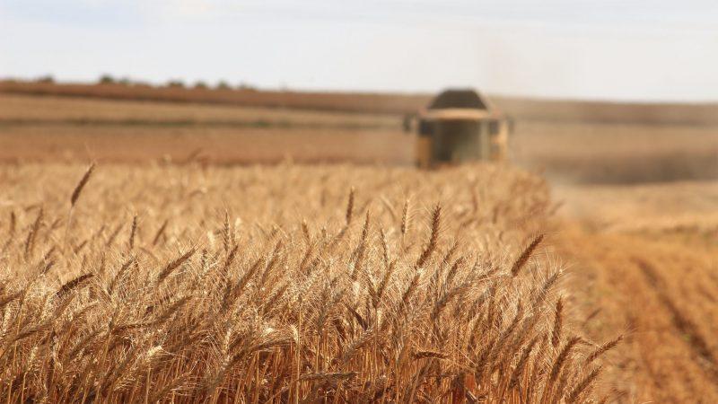 Dlaczego potrzebujemy Agroekologii? Źródło: Meriç Tuna [Unsplash]