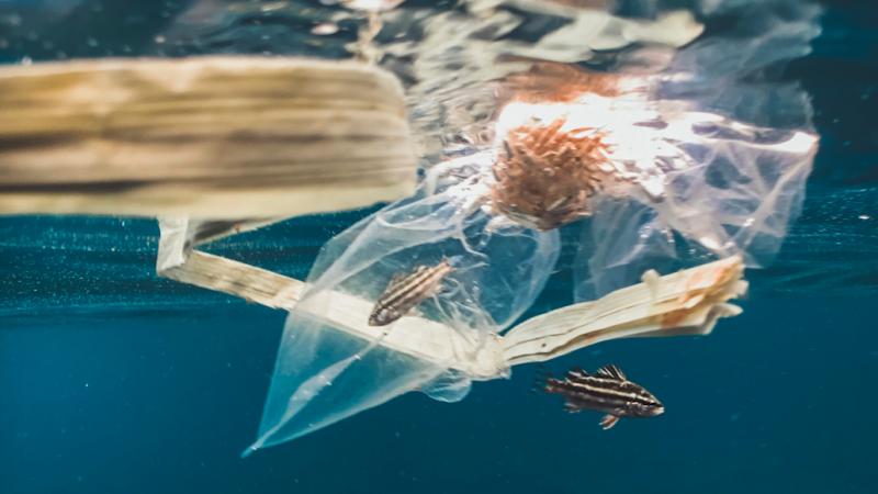 Jednym z największych problemów są odpady z tworzyw sztucznych w środowisku morskim (Photo by Naja Bertolt Jensen on Unsplash)