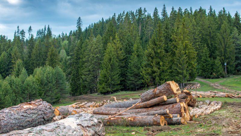 Bioróżnorodność, Rumunia,