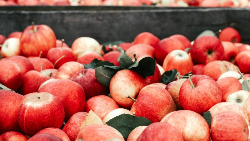 Sad jabłoniowy. Źródło: Joanna Nix-Walkup [Unsplash]