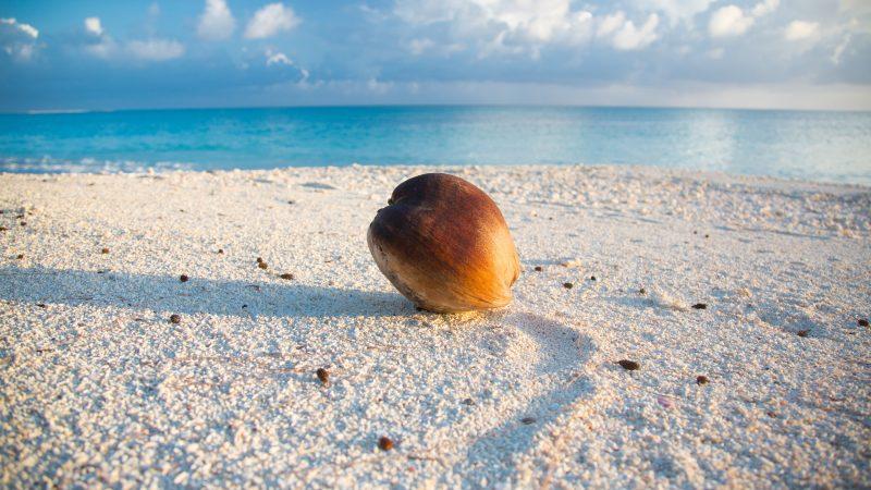 Na pacyficznych Wyspach Marshalla stwierdzono pierwsze zakażenia koronawirusem. Tym samym kraj ten znikł z listy państw wolnych od tego patogenu (Photo by Kurt Cotoaga on Unsplash)