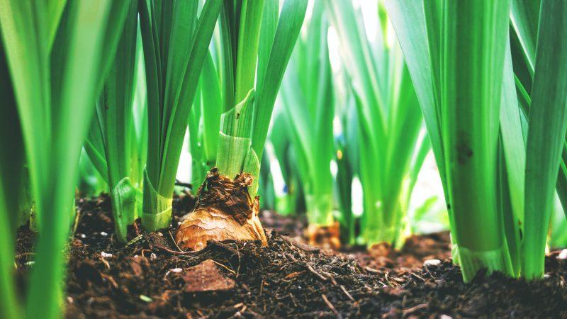 Agroekologia, środowisko, rolnictwo, klimat, Polska, Unia Europejska, bioróżnorodność