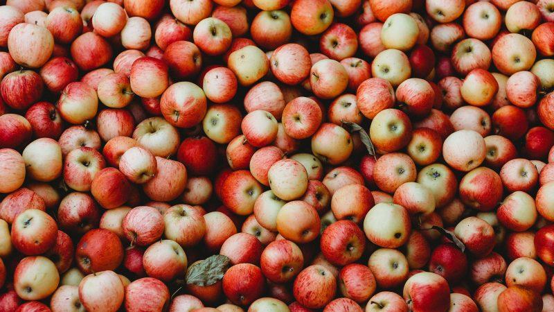 jabłka, Gala