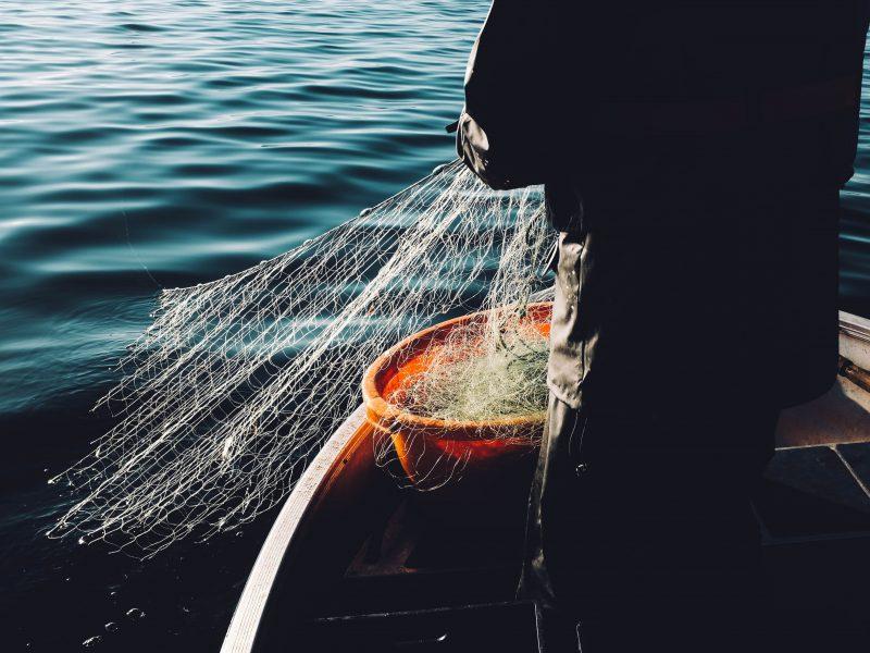 ryby, połów, rybak