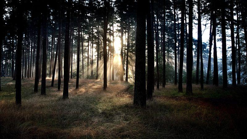 Las, leśnictwo