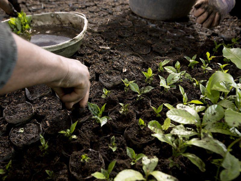 rolnictwo, WPR, pandemia, COVID19, pracownicy kluczowi, unia europejska, komisja europejska, DG AGRI