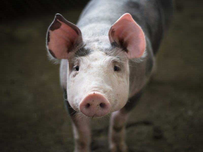 weganizm-puda-sylwia-spurek-piatka-dla-branzy-roslinnej-mieso-lyon-szkoly-unia-europejska-zmiany-klimatu-wege-argentyna-wołowina-wieprzowina