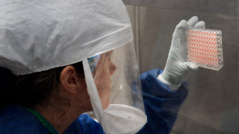 Rosja, ptasia grypa, H5n8