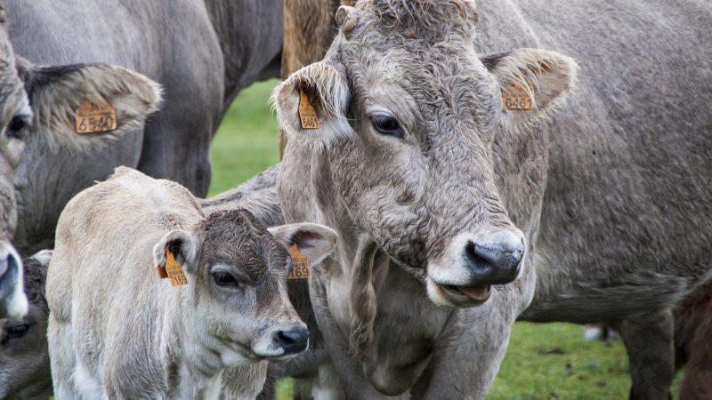 Poprawa dobrostanu zwierząt jest kluczowym priorytetem UE, obejmującym zarówno jeden z dziewięciu celów szczegółowych reformy WPR, jak i politykę żywnościową Komisji Europejskiej.