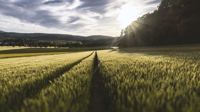 wies, pole, rola, rolnictwo, plan strategiczny, stanowisko