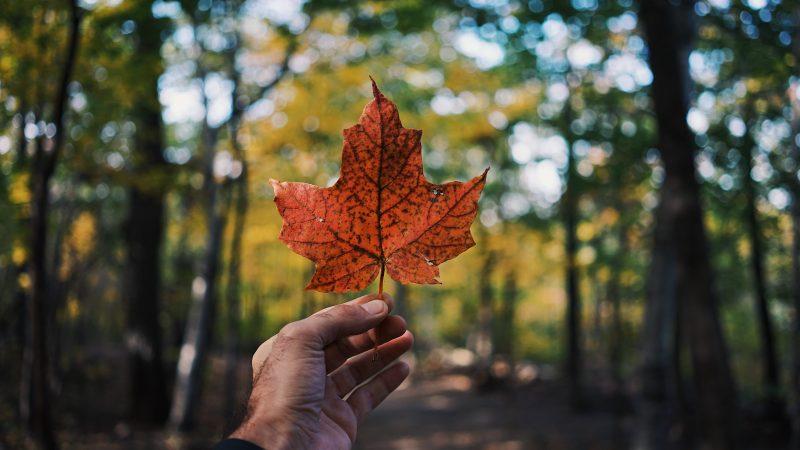 Kanada wciążrozlicza sięze swojej przeszłości i dawnego stosunku do Indian (Photo by Guillaume Jaillet on Unsplash)