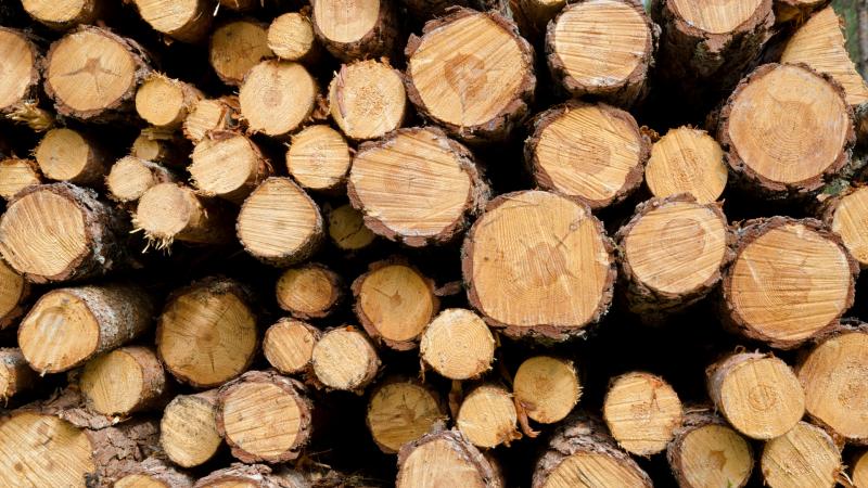 fit-for-55-komisja-europejska-biomasa-odnawialne-zrodla-energii-oze-neutralnosc-klimatyczna-redukcja-emisji-kryzys-klimatyczny-klimat-srodowisko-gazy-cieplarniane-drzewo-drewno-lasy