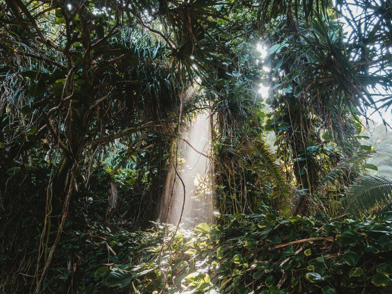 Bank Światowy: Do 2030 r. gospodarka światowa może tracić nawet 2,3 bln euro rocznie na skutek zniszczenia bioróżnorodności