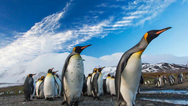 Antarktyda-pingwiny-cesarskie-zmiany-klimatu-ekologia-emisje-ziemia-zwierzęta
