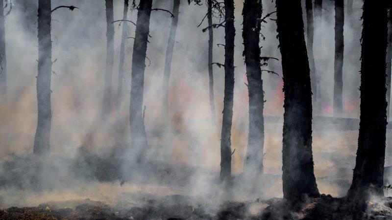pożar, las