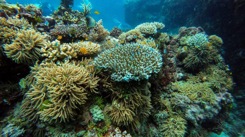 Powierzchnia żywych raf koralowych zmniejszyła się o ponad połowę od lat 50. XX wieku
