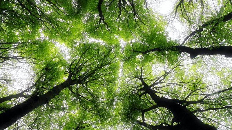 lasy, zagrożone gatunki drzew, Chiny, Brazylia, Polska, Europa, Madagaskar, BGCI