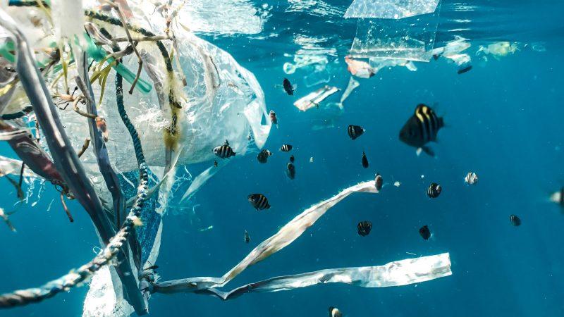 plastik, zanieczyszczenie, Indie, WWF. PKB, Unia Europejska