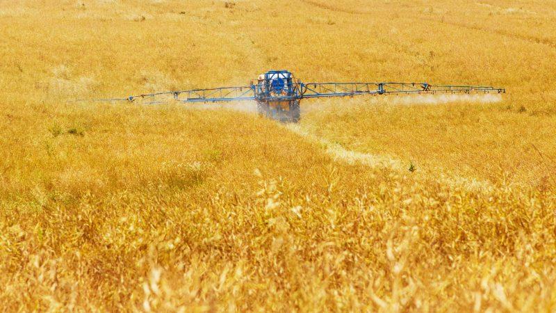 pryskanie, zboże, rolnictwo, opryskiwacz, pestycydy